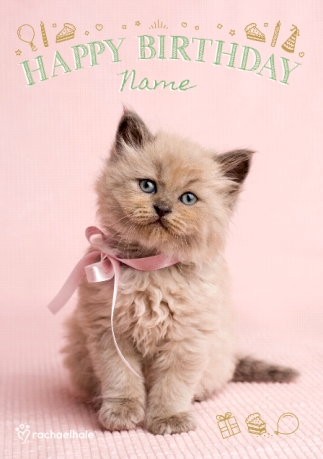 Cute Kitten With Pink Bow Birthday Card Funky Pigeon